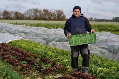 Daniel schewe erntet salat-fuer unsere biokiste